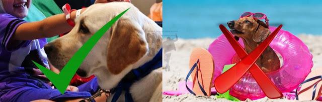 [Fatti & Misfatti] In Puglia la Pet Therapy è realtà ma la Regione vieta il mare agli animali domestici