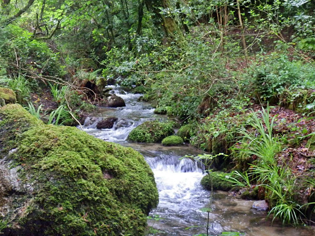 Gover Stream, Gover Valley Cornwall