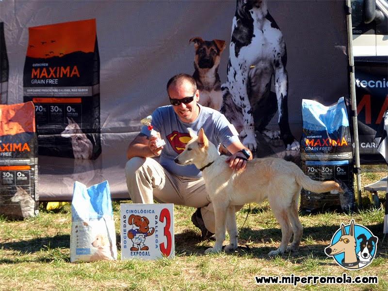 Can de Palleiro en el podio del tercer lugar de una exposición Canina