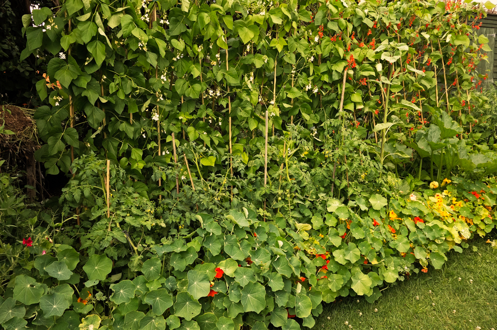 Ann miles photography vegetable patch for Vegetable patch
