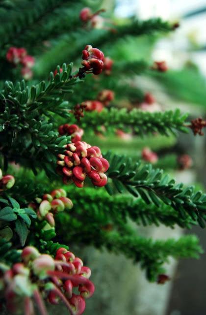 Torquay's plants
