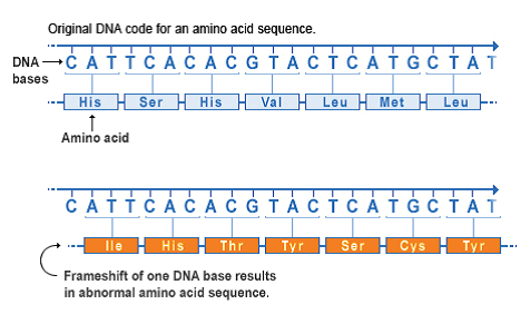 This type of mutation occurs when the addition or loss of DNA bases changes a gene's reading frame