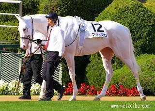 Gène Dominant White chez le cheval.