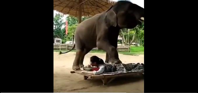 Elephant Massaging A Woman