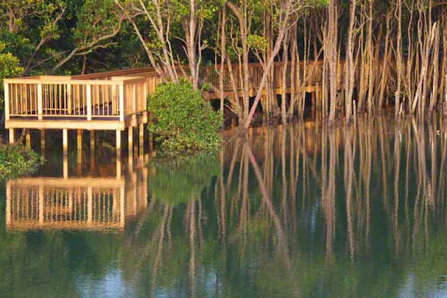 decking, mangroves, Okinawa, reflections, river