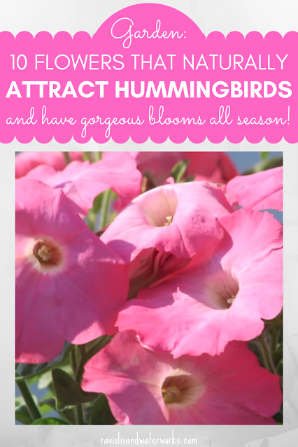 how to make a hummingbird and butterfly garden