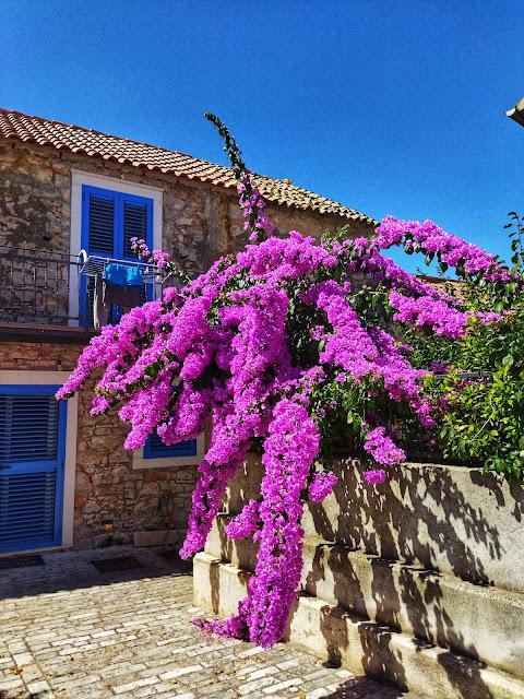 natura Chorwacja, kwiaty, oleander, wakacje