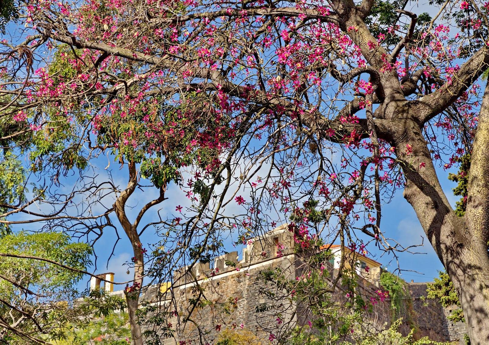 a árvore em flor e a fortaleza