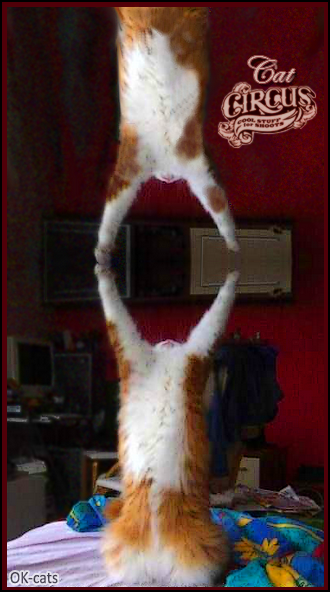 Photoshopped Cat picture • When you can enjoy a private cat circus at home Cose your cats amazingly graceful !