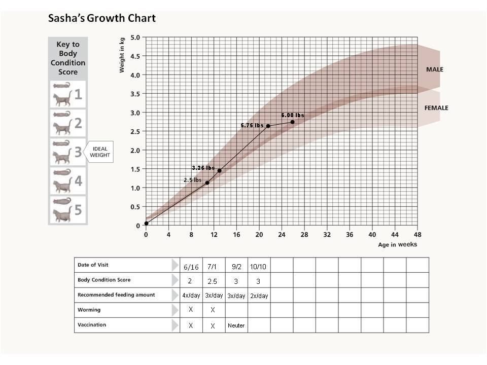 Sasha\u0027s Growth Chart Felinimity