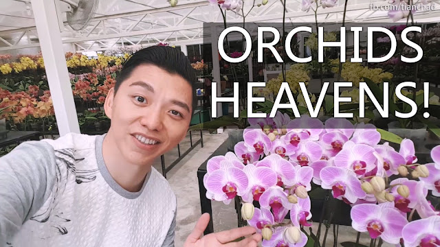 Orchids Flower Heaven in Malaysia That You Wouldn't Want To Miss!