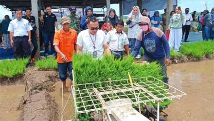 Petani Nagari Persiapan Bunuik Pasbar Adakan Acara Turun ke Sawah