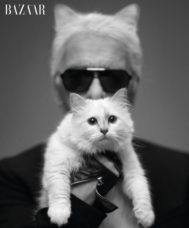 karl lagerfeld with cat
