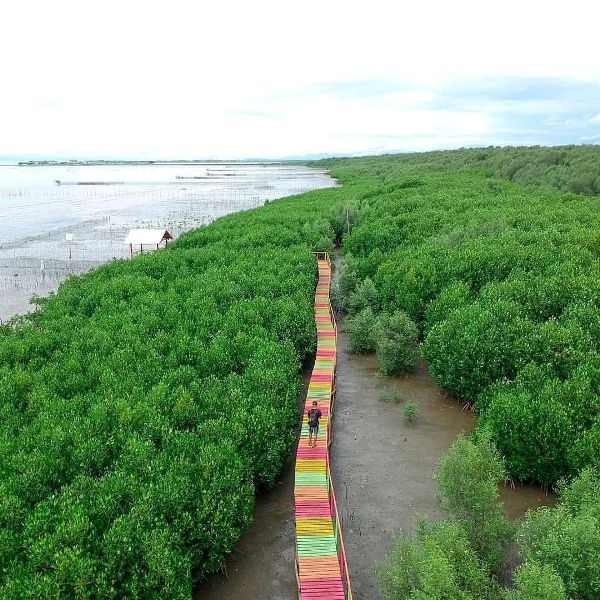 ekowisata mangrove lantebung