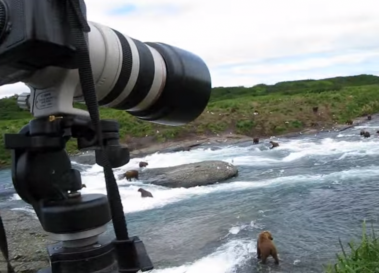 Look at all the bears fishing in the river! - A Brown Bear Sat Down Right Next To Him While He Filmed It All!