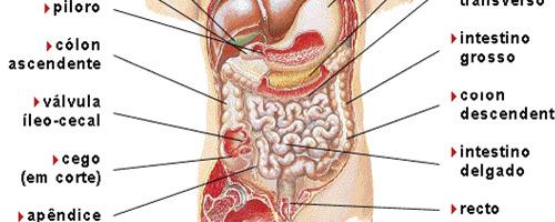 10 funções corporais que continuam mesmo depois da morte - Digestão