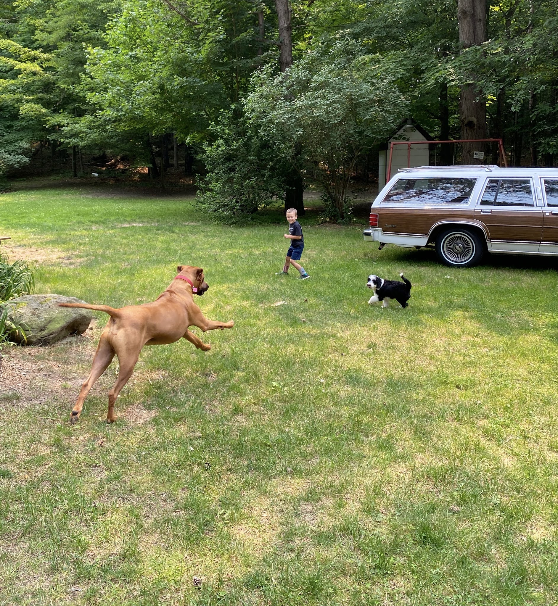 Playing with the Pups | biblio-style.com