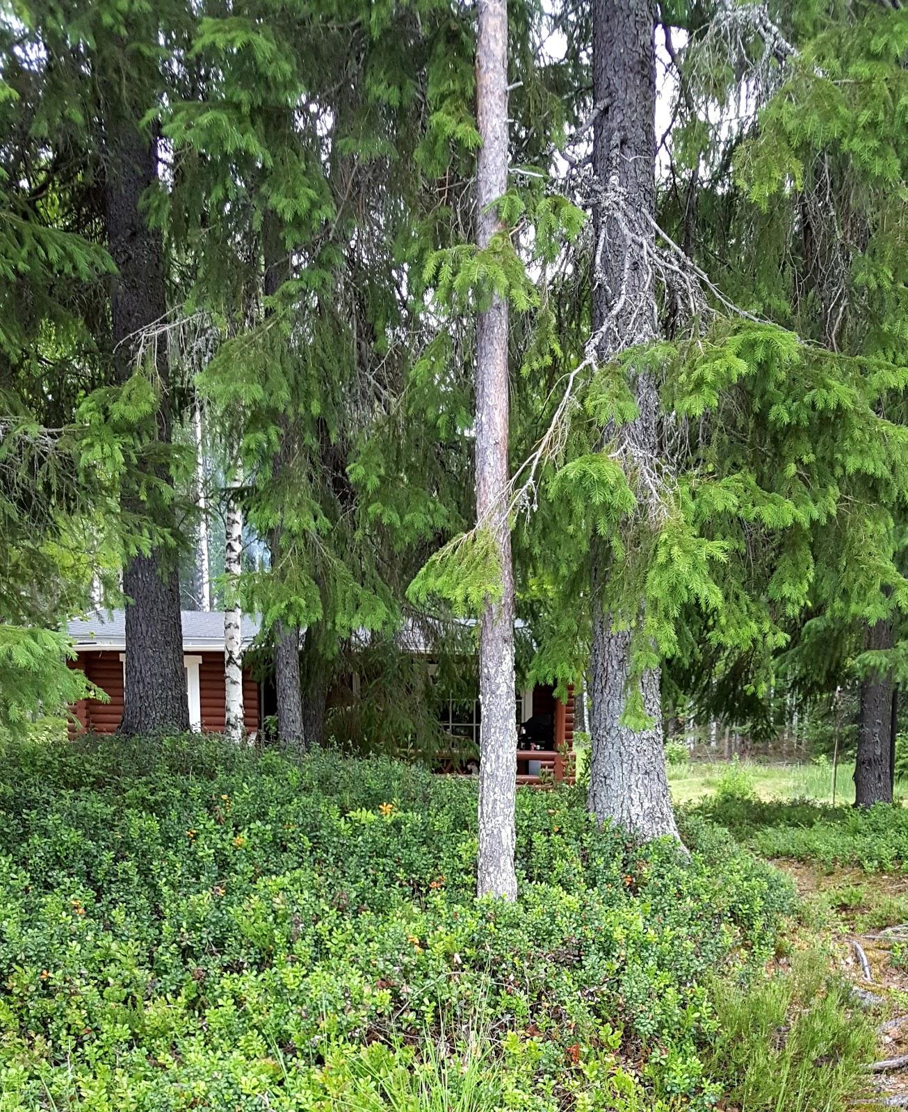 kesämökki Timovaarassa Pohjois-Karjalassa