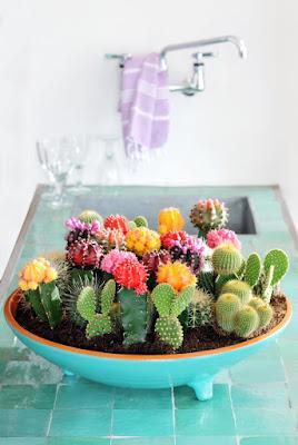 cactusi mini