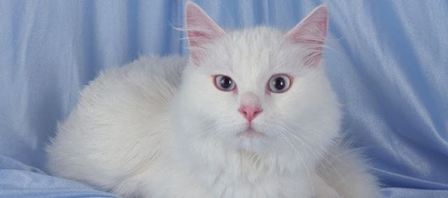 Η γάτα σας μαδάει - Τι πρέπει να κάνετε;