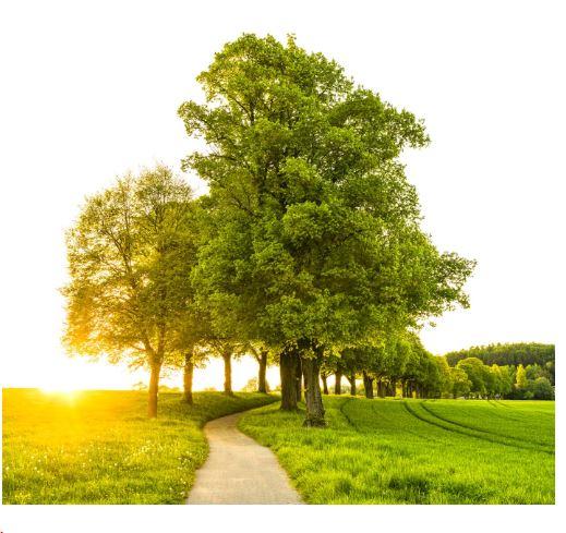 لماذا لا يستطيع البشر البقاء بدون غابات؟