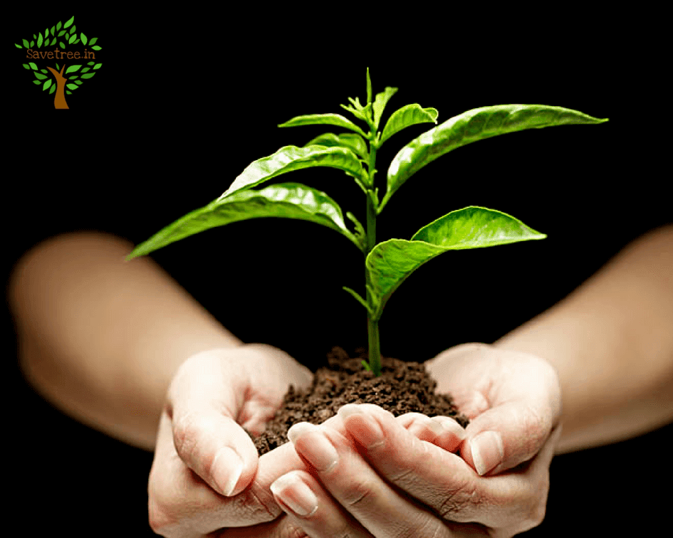 7 most important point on save trees the point that can save tree
