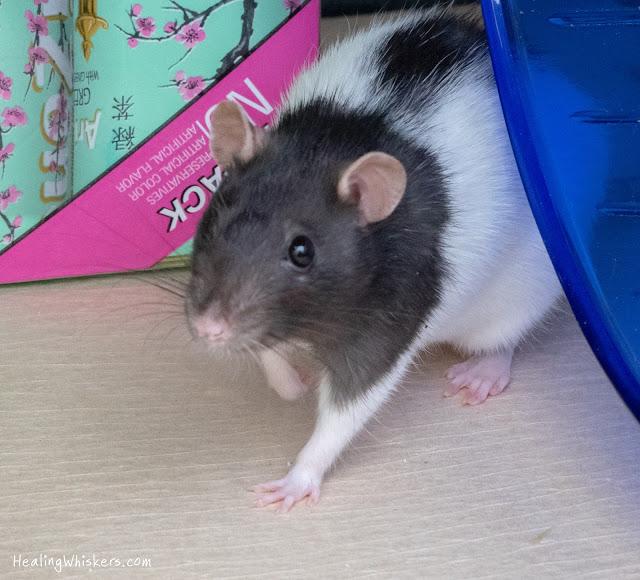 odor absorbing rat cage liner