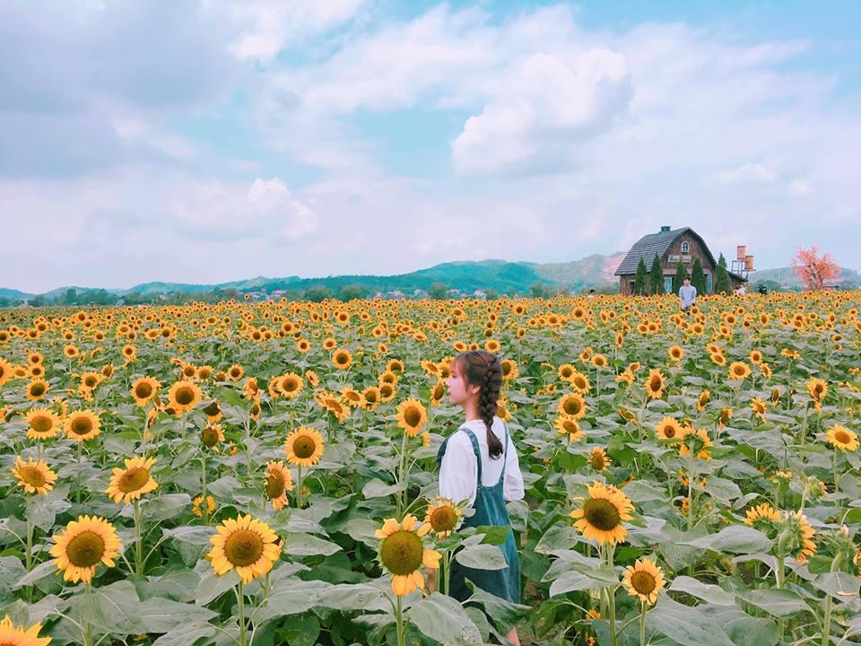 Giới trẻ 'phát sốt'' với vườn hoa hướng dương tại Bắc Giang -9