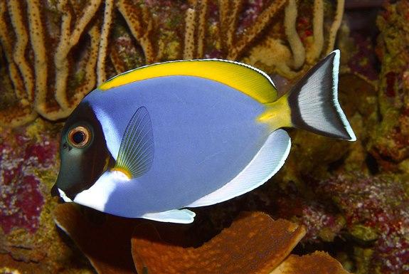 Cerrah balığı C Hayvan İsimleri