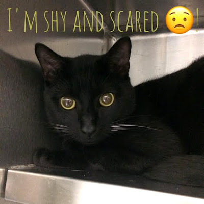 Shelter cat who is scared and shy.