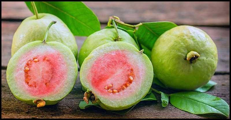 Guava: Medicinal Uses And Health Benefits