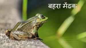 *बहरे मेंढक की कहानी* || *The story of the deaf frog* successful story in Hindi ||