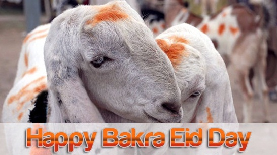 Bakra Eid -ul-Adha Zuha sms message wishes in english Urdu Hindi with images pictures Greetings Card