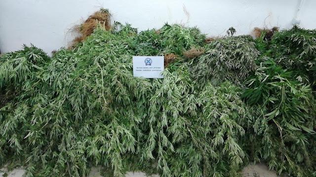 Εντοπίσθηκαν τρεις φυτείες κάνναβης στα Γεράνεια Όρη με 2.303 δενδρύλλια