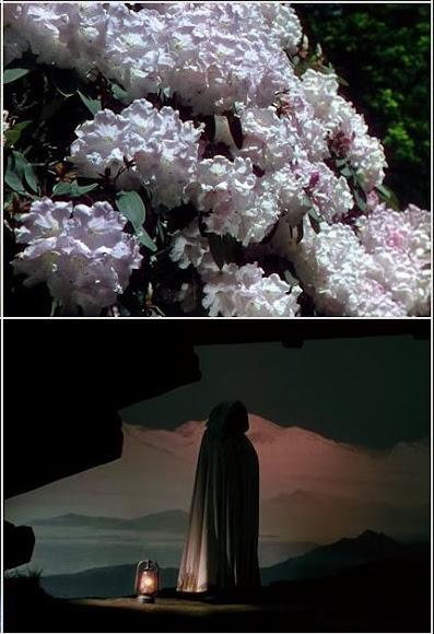 Narciso Negro (1947) Black Narcissus, descargar ver online