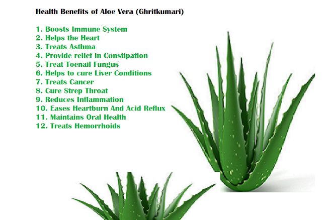 Health Benefits of Aloe Vera (Ghritkumari)