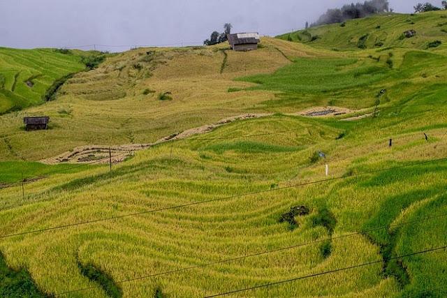 Ngắm cảnh sắc 'thiên đường' ruộng bậc thang hùng vĩ ở Y Tý Lào Cai 1