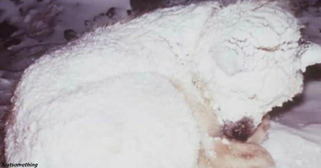 Собака 2 дня грела мальчика, которого мама бросила умирать на морозе