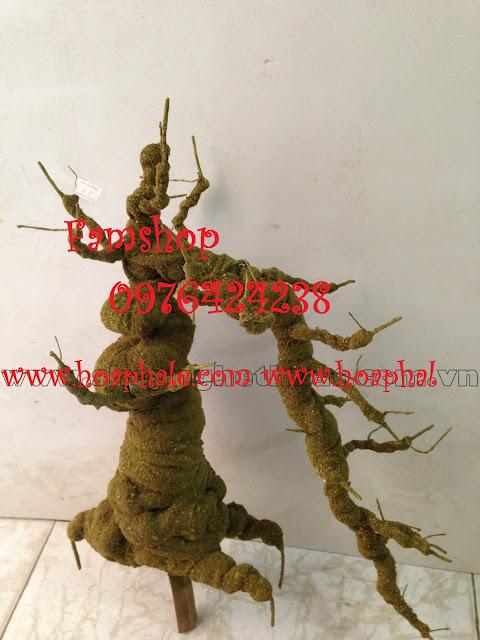Goc bonsai mai dao tai Dang Thuy Tram