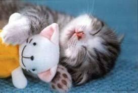 kucing imut malas bangun