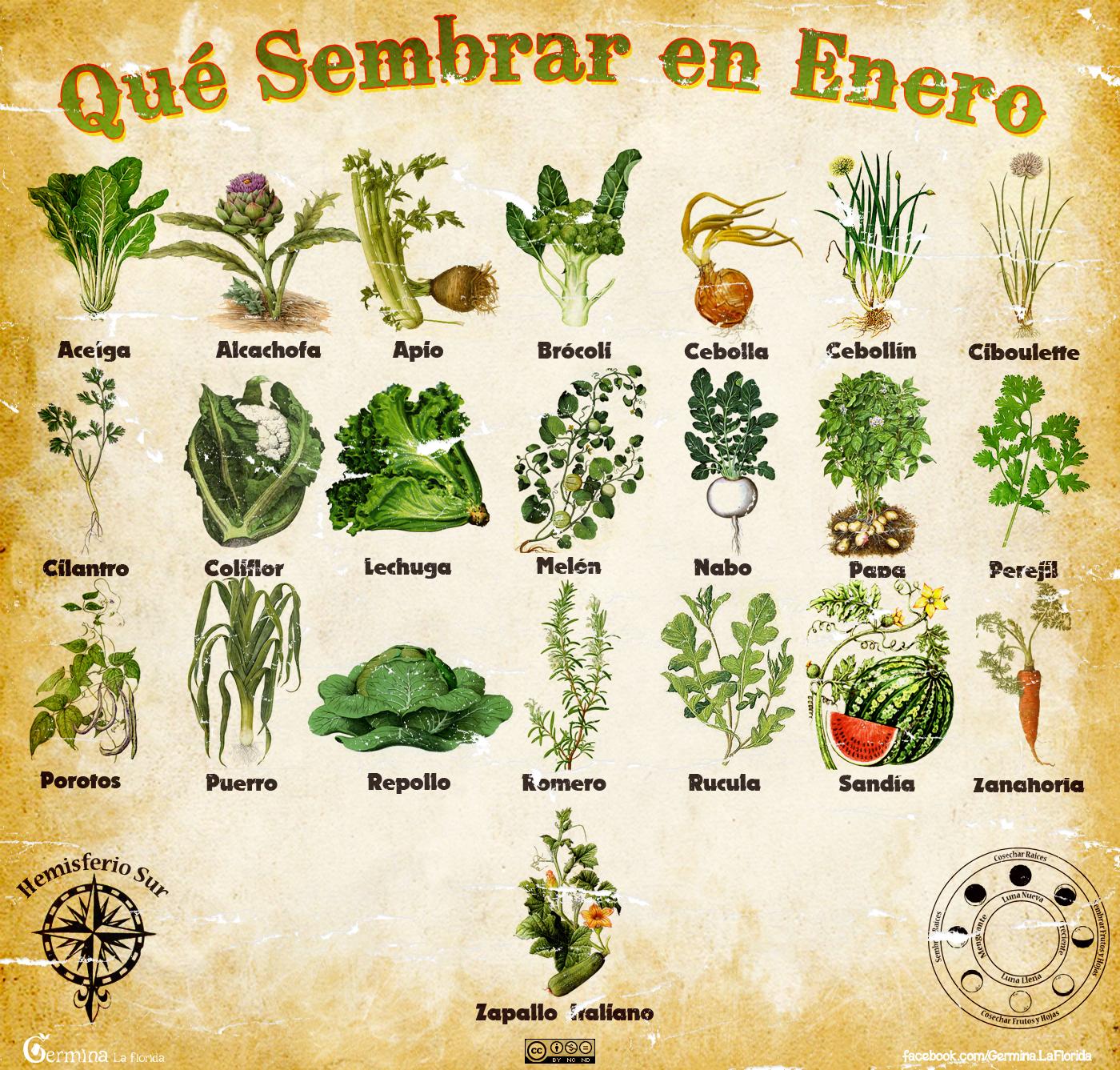 Germina la florida calendario de siembra de enero - Que plantar en el huerto ...