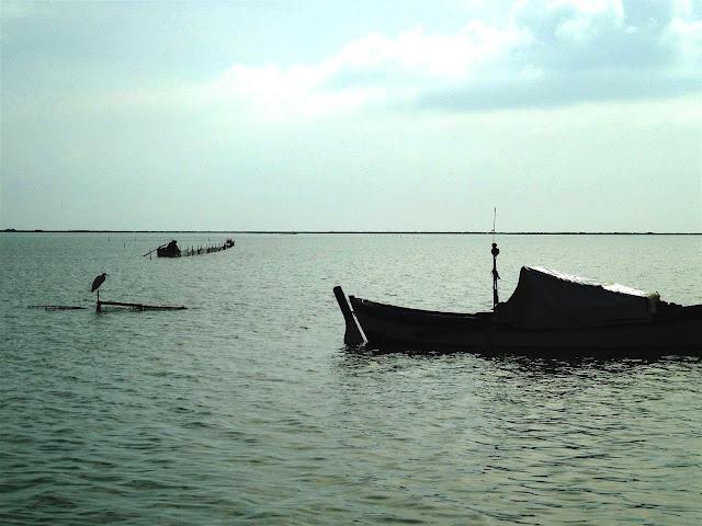 Dalyanda balıkçıl ve tekneler