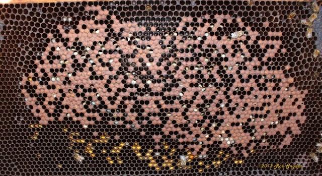 Καταπολέμηση όλων των ασθενειών των μελισσιών και πρόληψη για υγιή μελίσσια! Μέθοδοι θεραπείας
