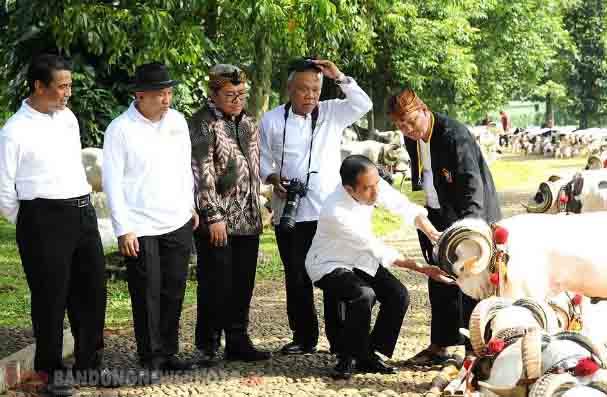 Bisnis Ternak Kambing, Jokowi: Untungnya Gede Juga