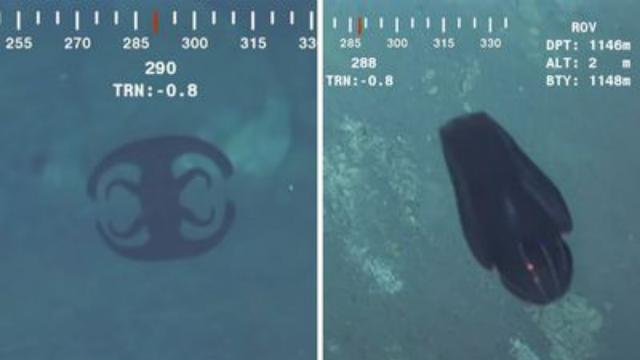 Jellyfish like creature filmed in the India ocean looks Alien.