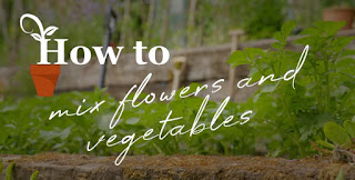 Flowers and vegetables