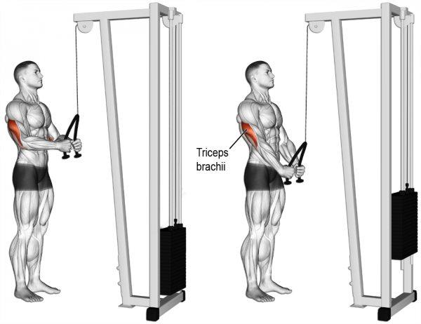 Rope Triceps Pushdown