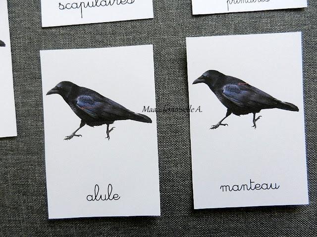 Cartes de nomenclature : Anatomie de l'oiseau