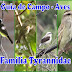 Guia de Campo das Aves do Museu de História Natural e Jardim Botânico da UFMG – Família Tyrannidae