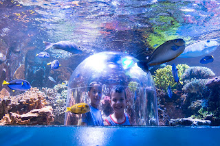 boys in t-shirts smile in delight from the Sioux Falls Butterfly House & Aquarium's pop-up dome as colorful fish swim by
